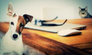 Studious dog background image | The WellPet Center