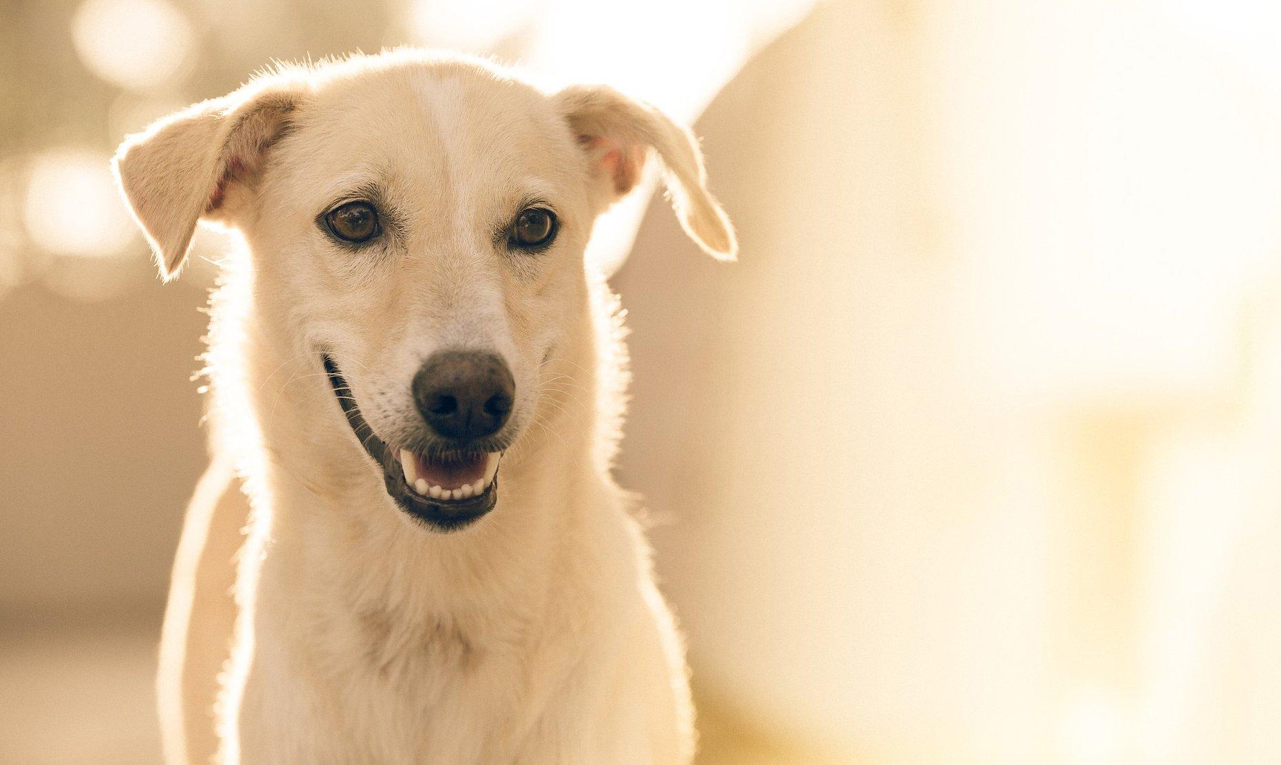 Smiling dog background image | The WellPet Center