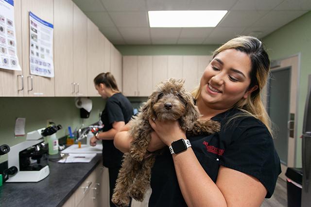Request a veterinary prescription refill - Katy, TX - The WellPet Center Veterinary Hospital