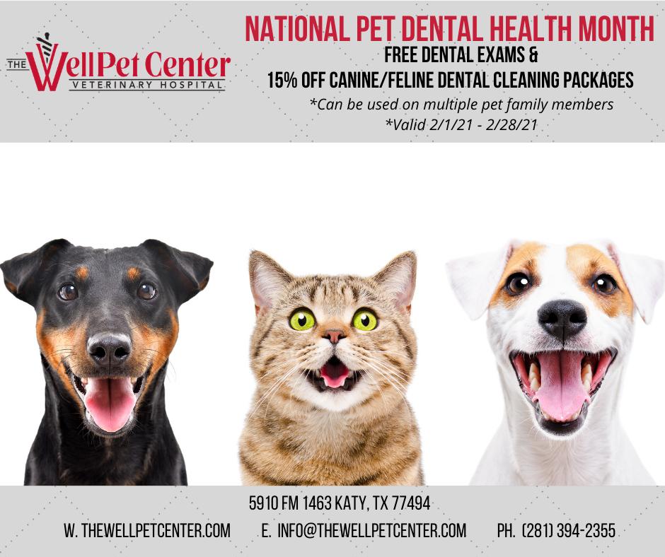 February, National Pet Dental Health Month